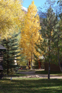 aspen-trees-outside-cabins-200x300.jpg